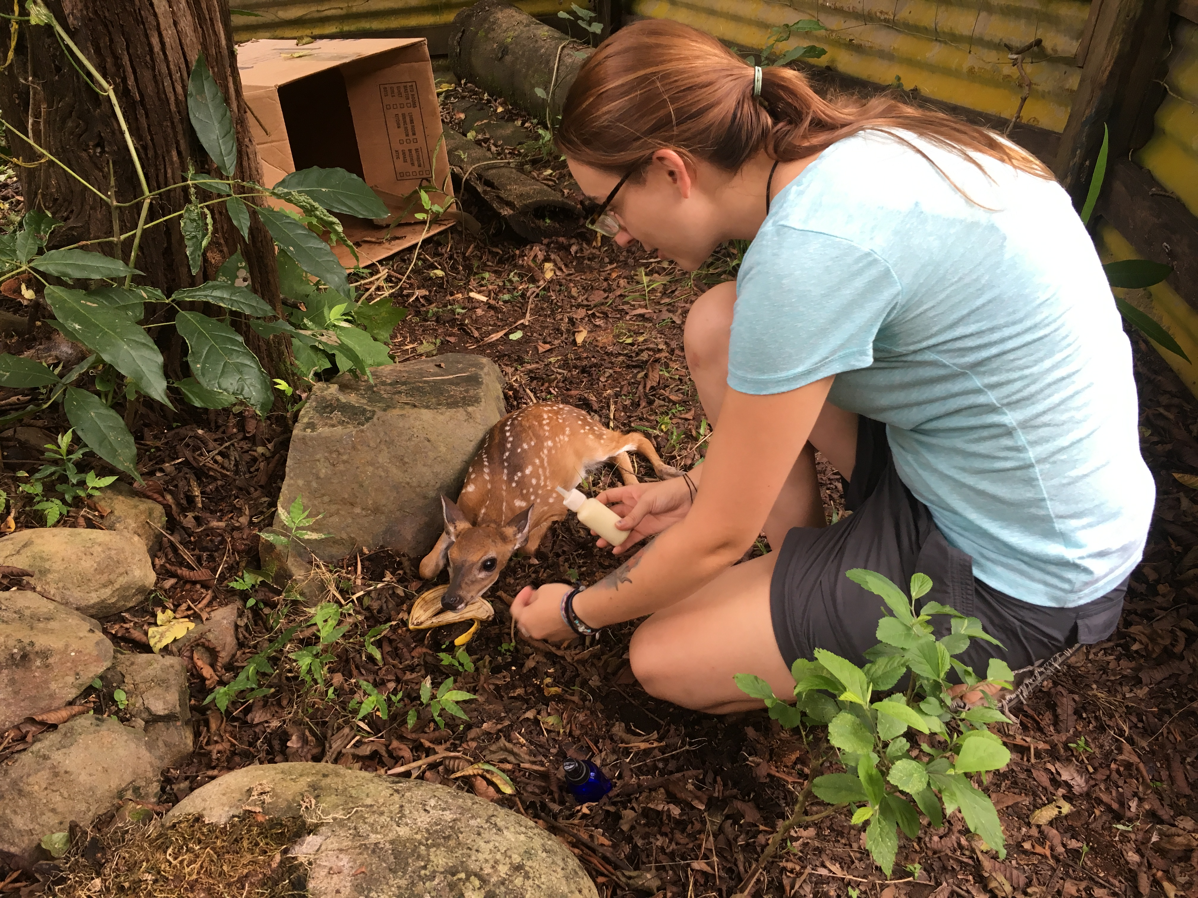 volunteer, sustainability and animal welfare
